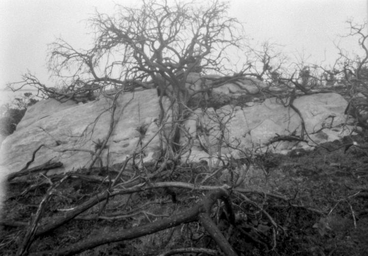 KodakAutograph2Fern