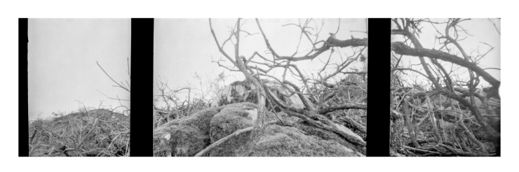 KodakAutograph2FernPanel