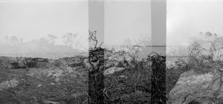 KodakAutograph2Rocks&Ferns